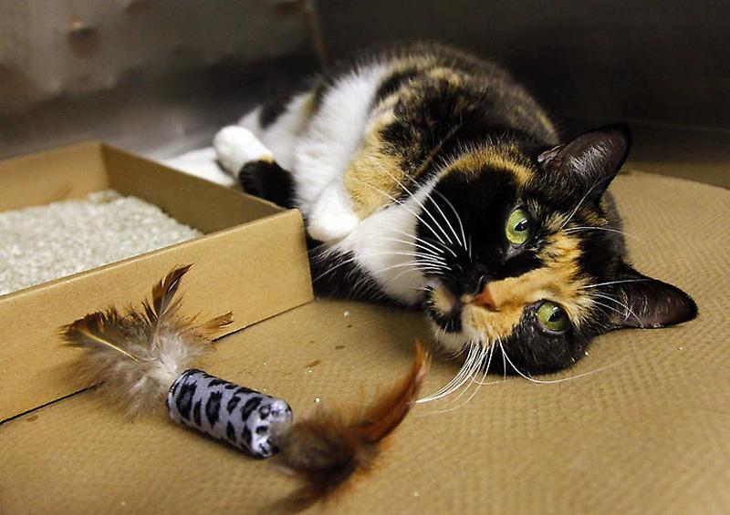 Кошка-путешественница за 5 лет добралась из Колорадо в Нью-Йорк