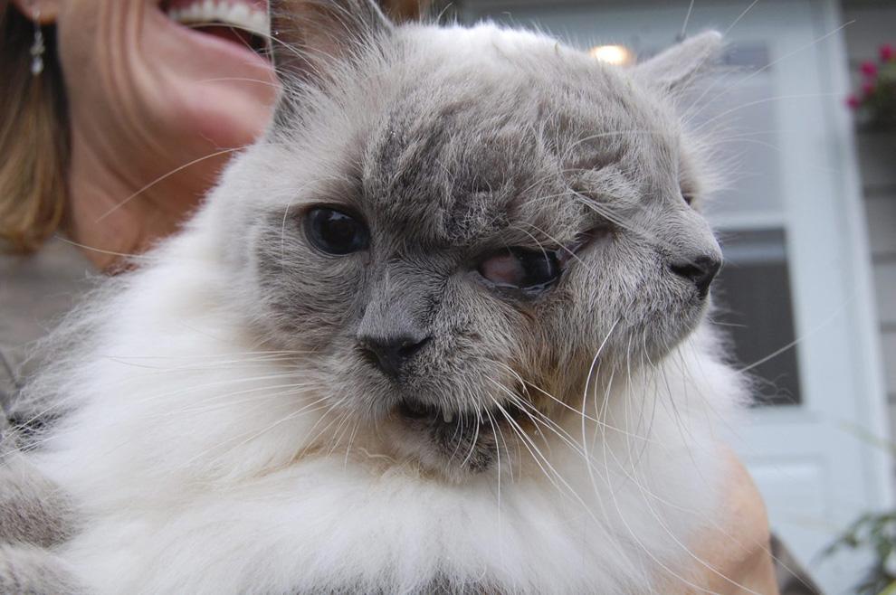 tumblr ls74mdeNHP1qze0z6 Кот с двумя мордочками отметил 12 й день рождения