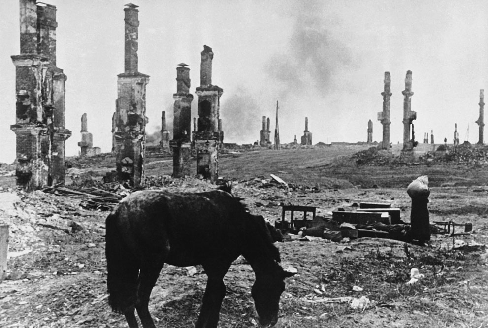 war23 Вторая мировая война: Восточный фронт. Лошадь на фоне руин Сталинграда, декабрь 1942 года.
