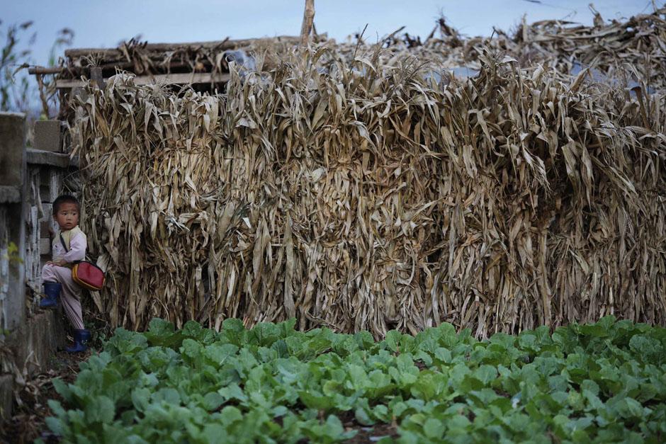 1233 Kelaparan di Korea Utara