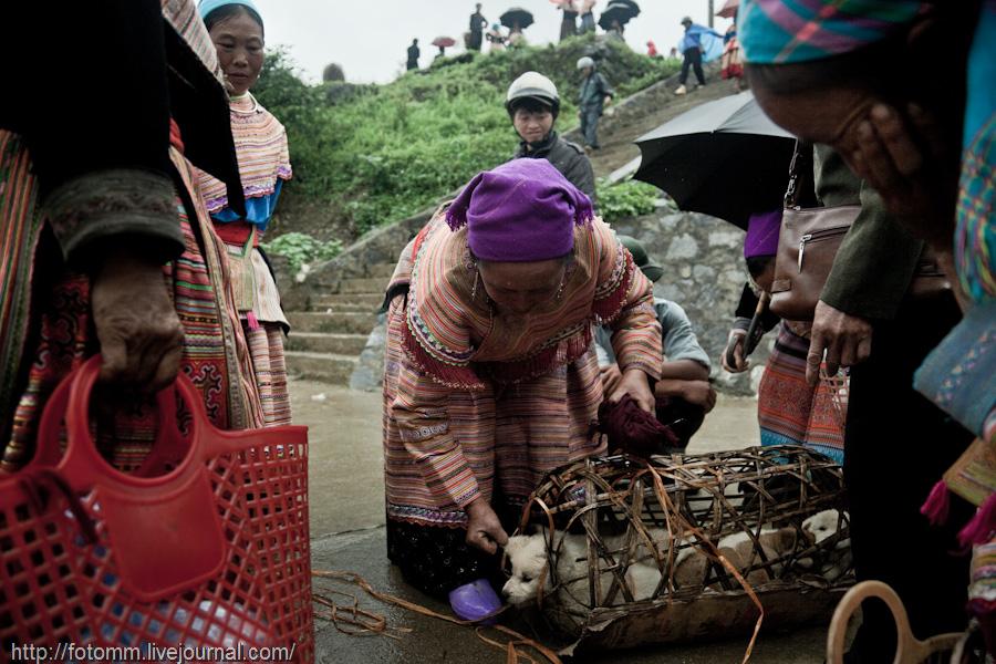1342 pasar pertanian kolektif di Vietnam Pertambangan