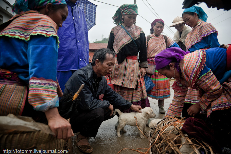 1442 pasar pertanian kolektif di Vietnam Pertambangan