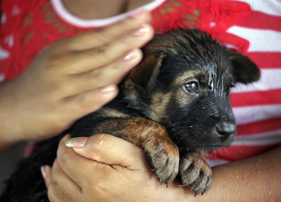Животных в затопленном таиланде