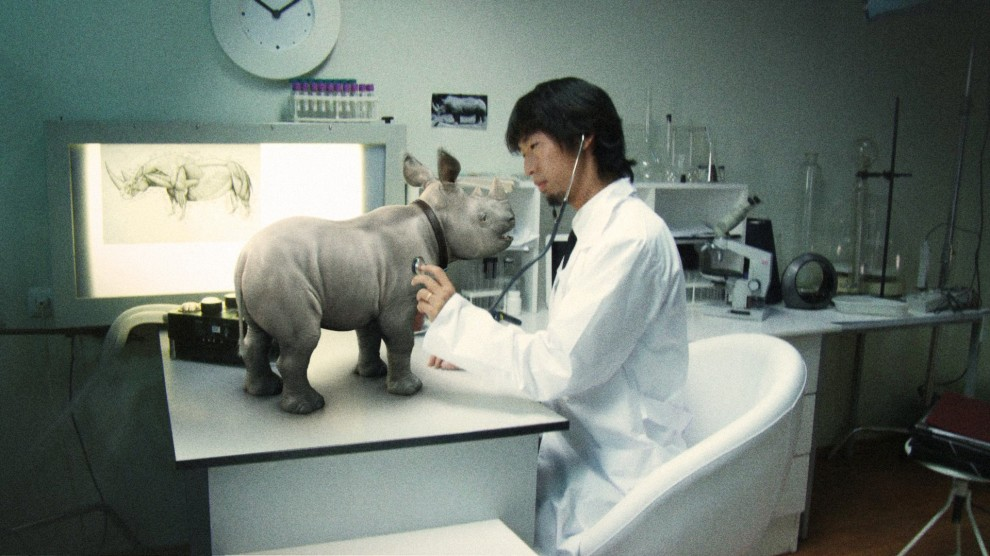 320 990x556 Комнатный носорог