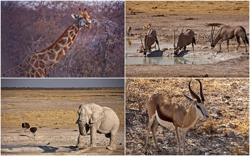 Национальный парк Этоша в Намибии