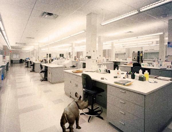 laboratory 600  Комнатный носорог