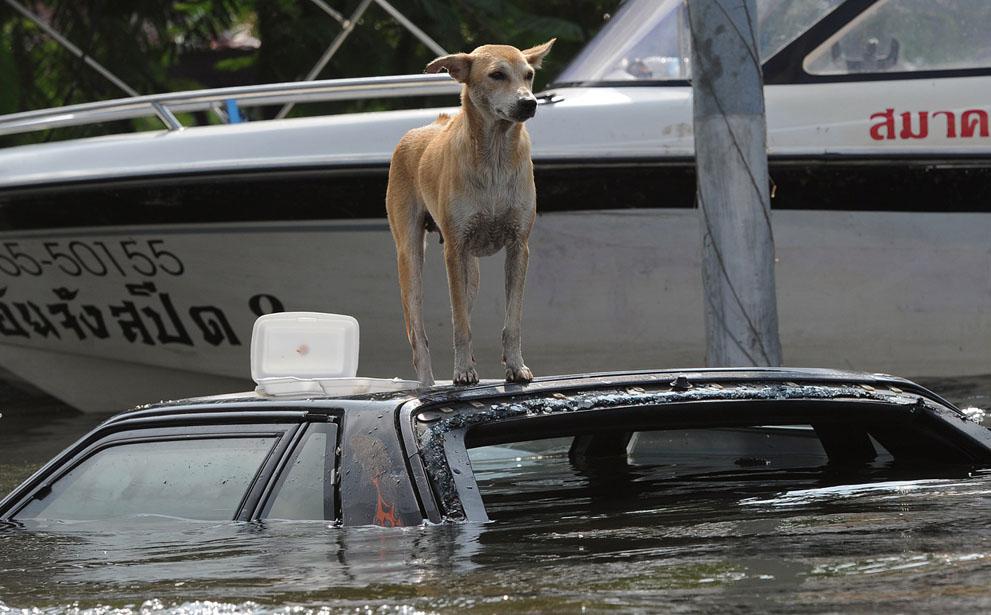s T27 29.046.777 banjir di Thailand