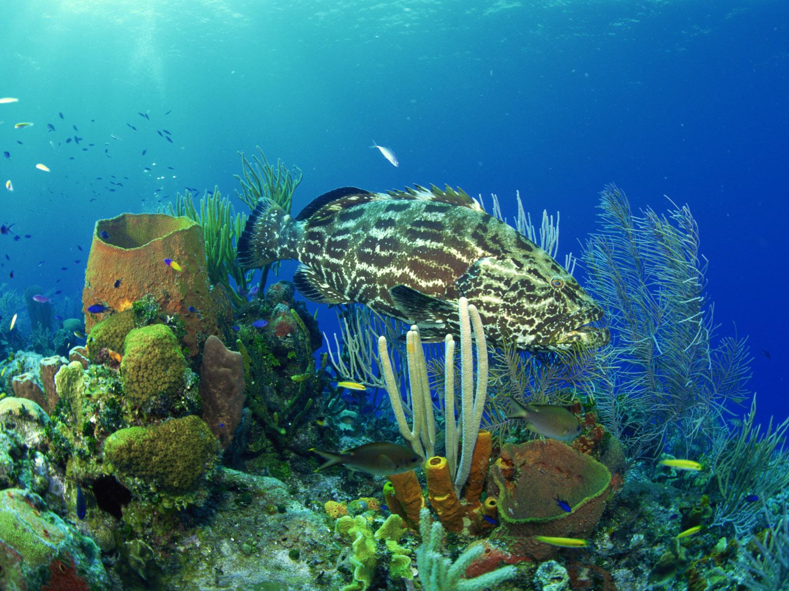 это фотографии высокого качества подводный мир того, как