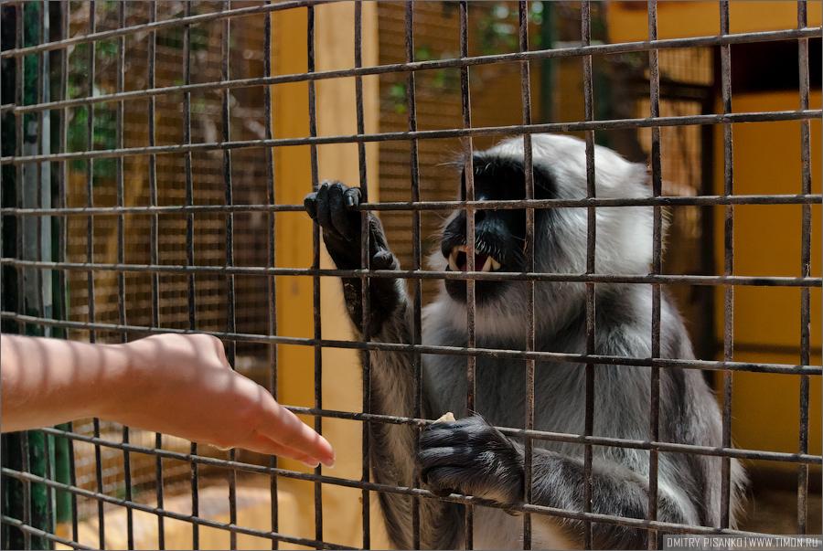 10151 Monkey Park