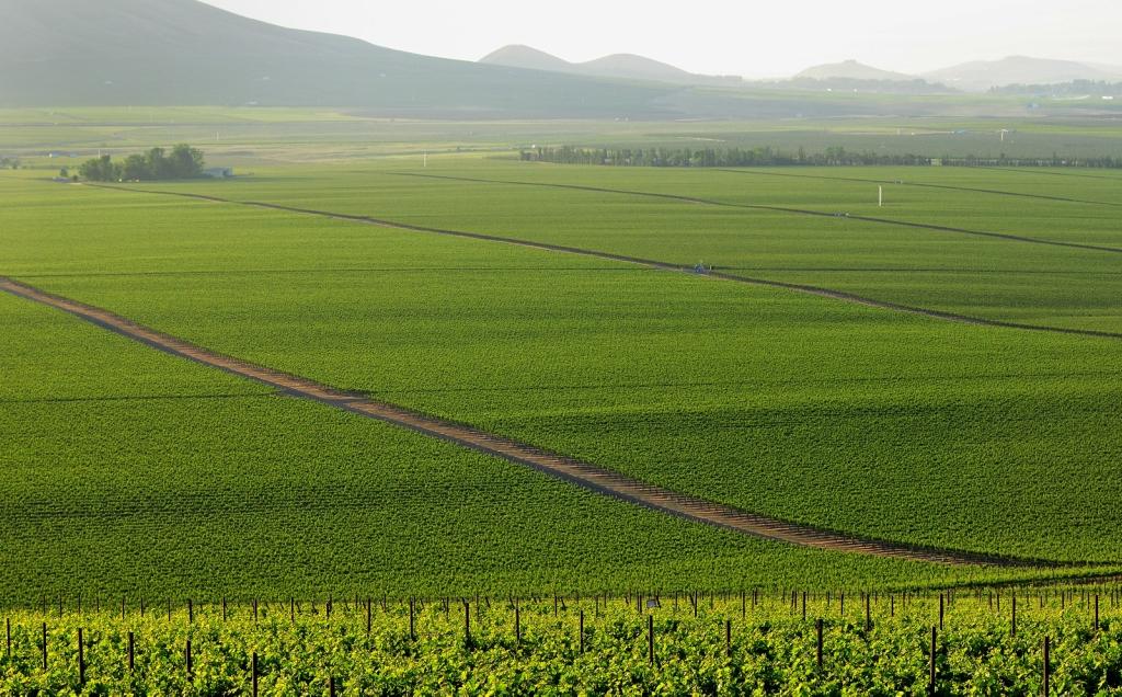 10161 Виноградники в фотографиях