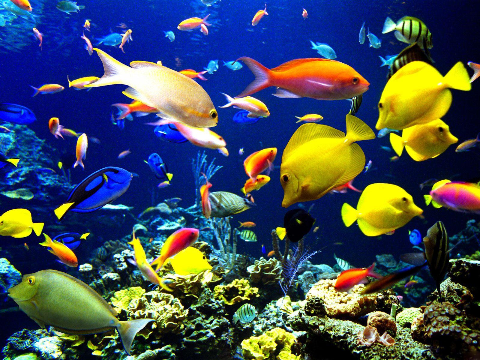 Летием победы, подводный мир картинки на рабочий стол