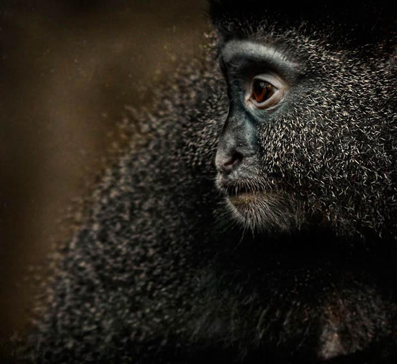 1030 Планета обезьян