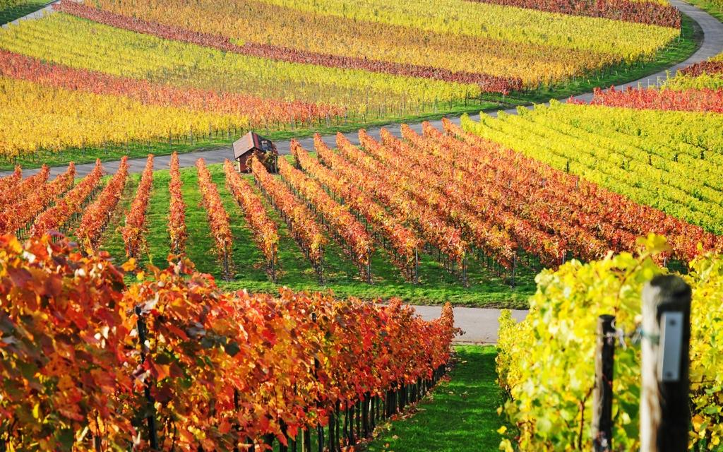 11001 Виноградники в фотографиях