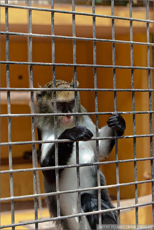 11180 Monkey Park