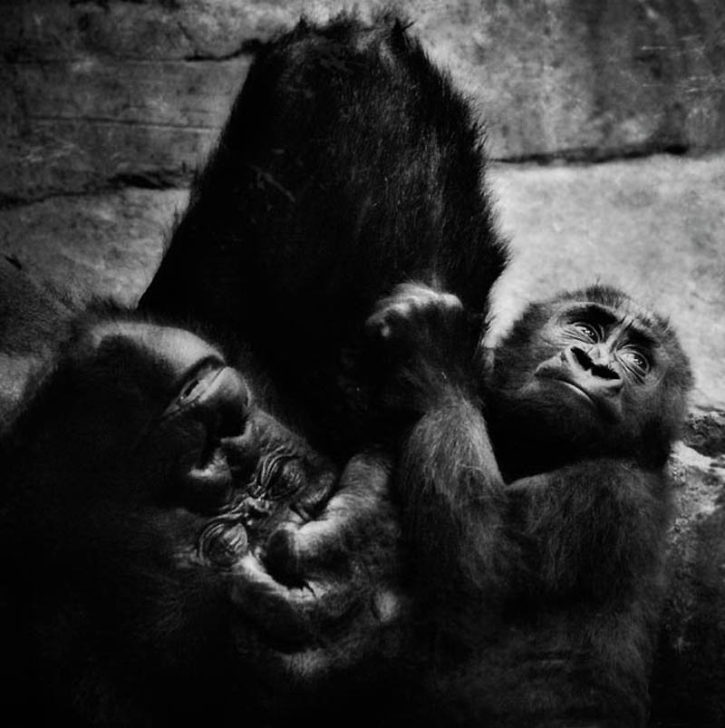 1135 Планета обезьян