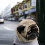 Самый грустный пес в мире