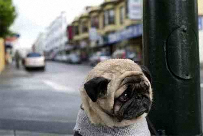 1209 Самый грустный пес в мире