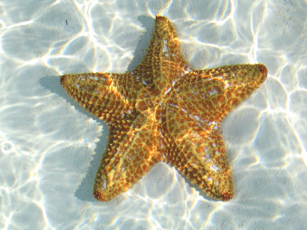 12125 Морские звезды в фотографиях