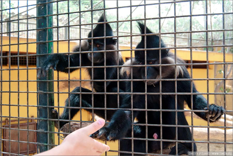 12156 Monkey Park