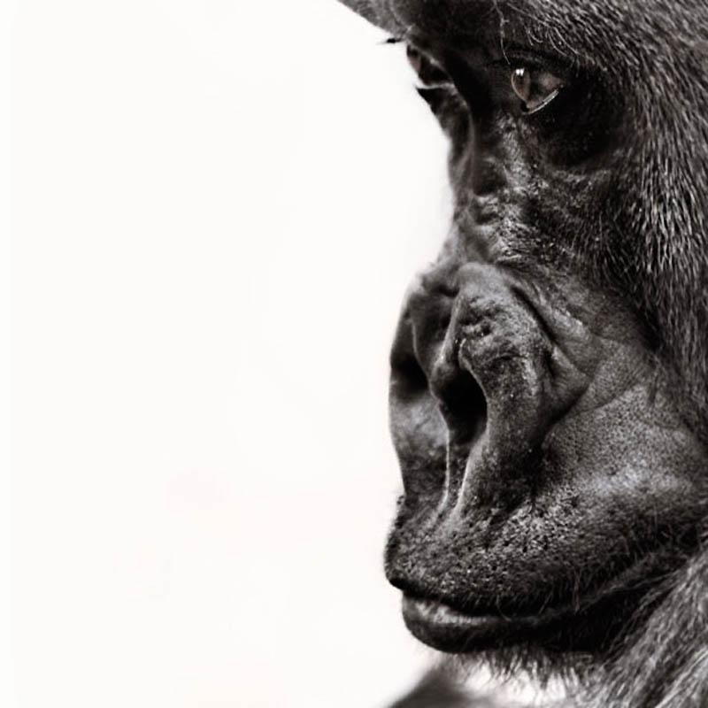 1228 Планета обезьян