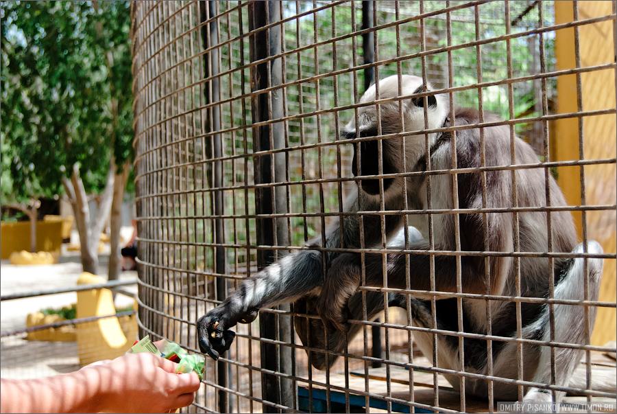 13139 Monkey Park