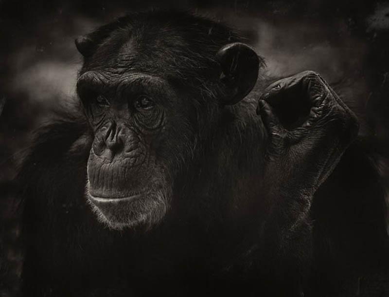 1327 Планета обезьян