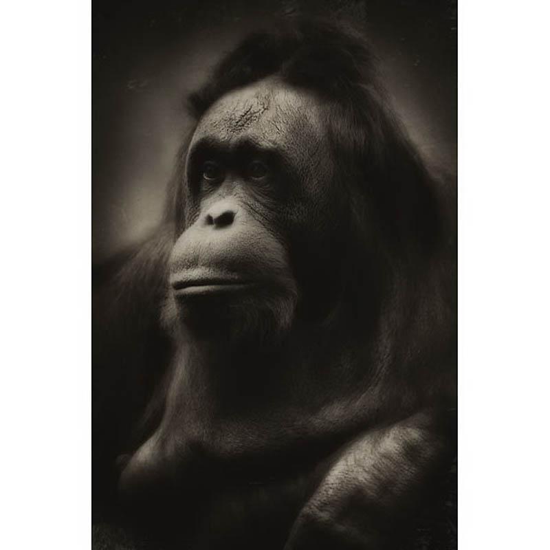 1426 Планета обезьян
