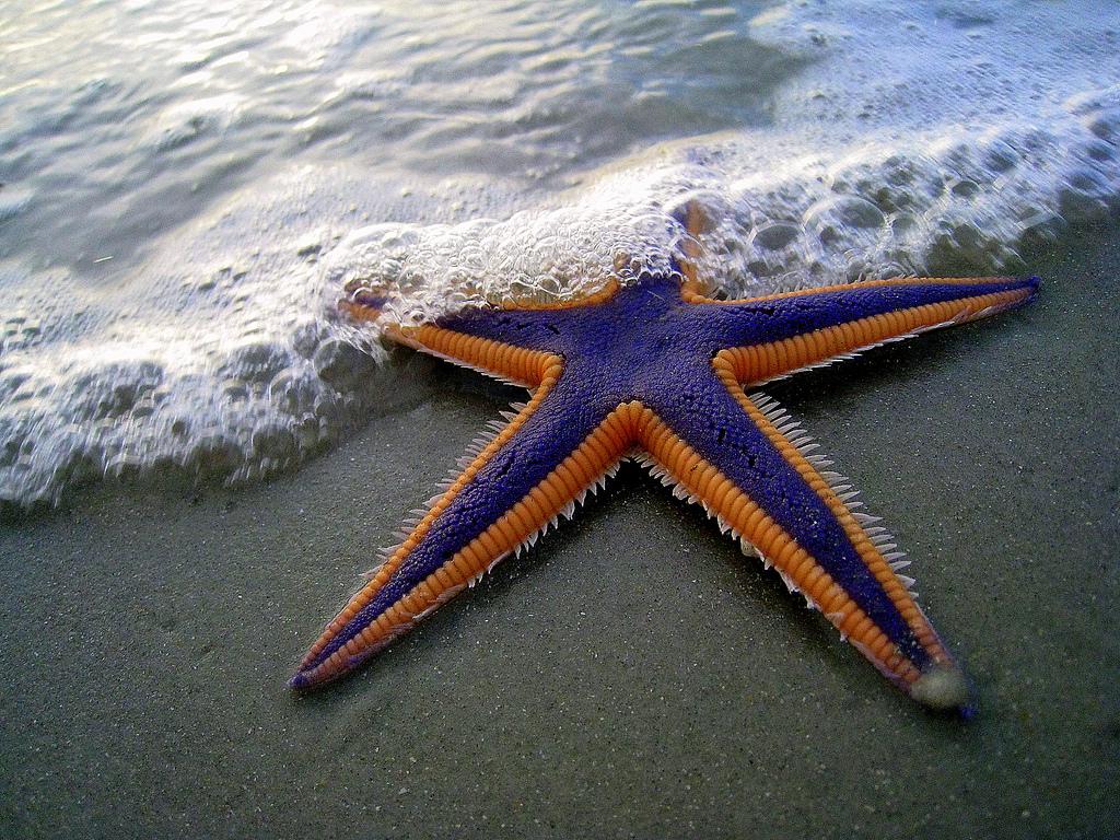 1500 Морские звезды в фотографиях