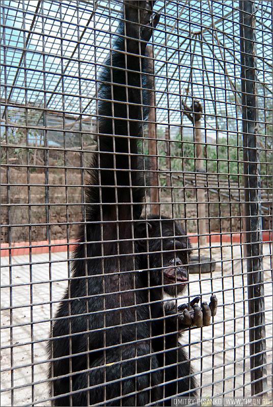 15124 Monkey Park