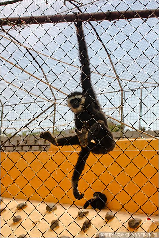 16119 Monkey Park