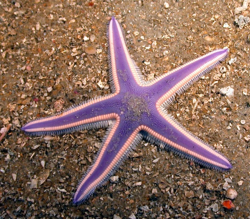 1690 Морские звезды в фотографиях
