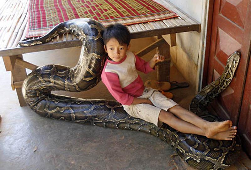 1703 Rumah python