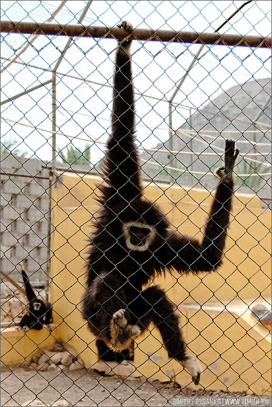 17113 Monkey Park