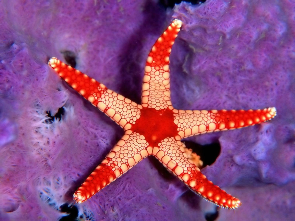 1785 Морские звезды в фотографиях