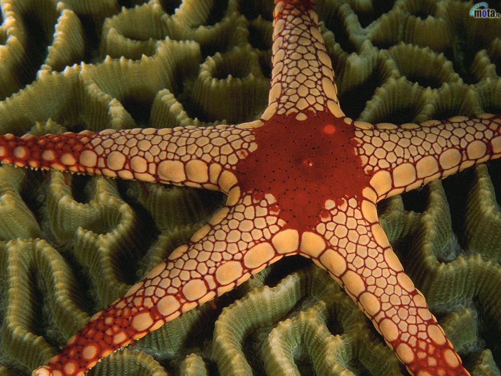 1875 Морские звезды в фотографиях