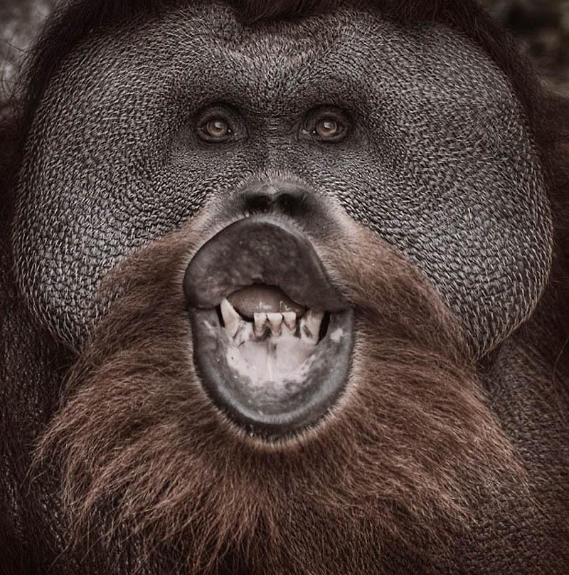 2109 Планета обезьян