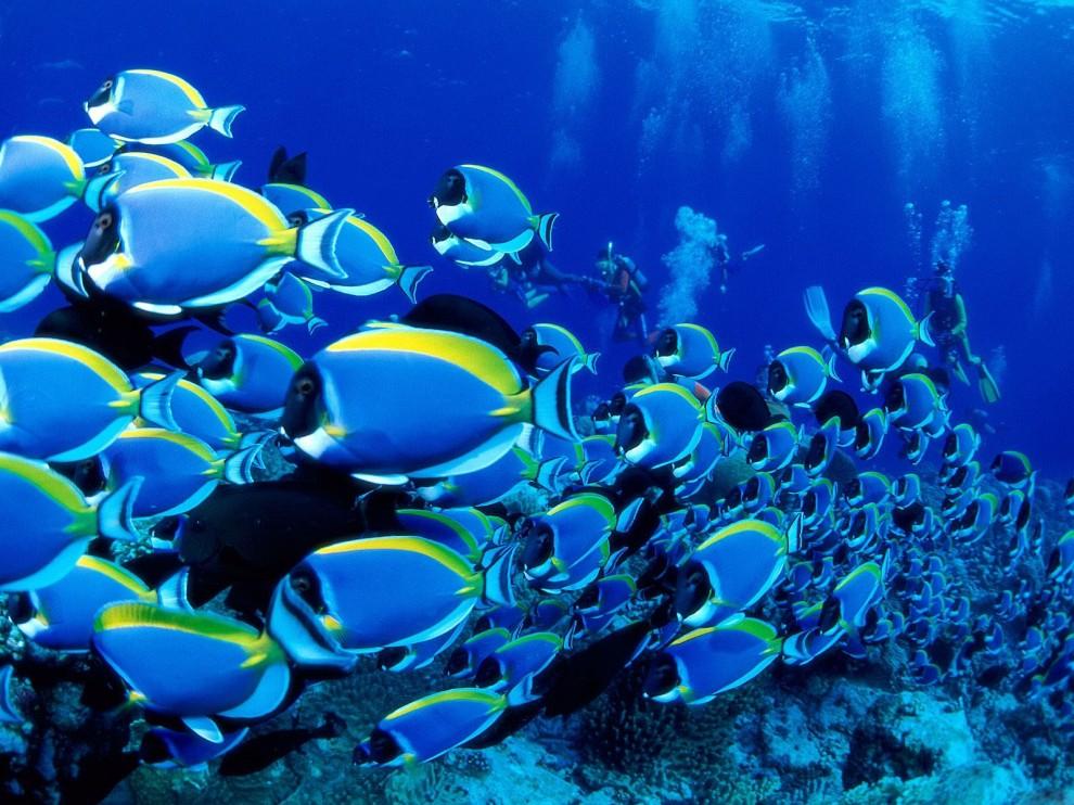 213 990x742 Обои для рабочего стола: Красоты подводного мира