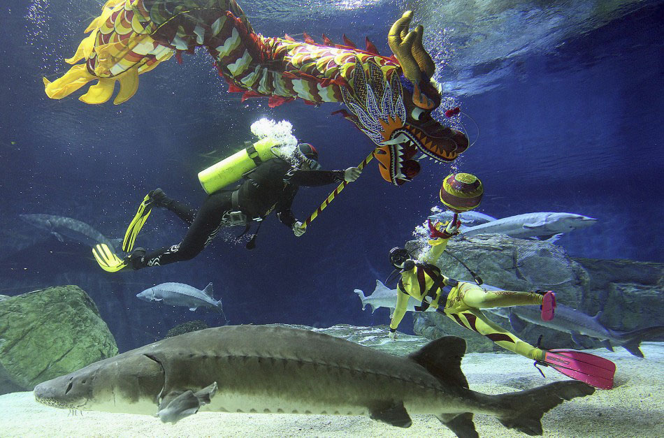 217624 divers perform a dragon dance during an event to celebrate the chinese Подготовка к китайскому Новому году Дракона