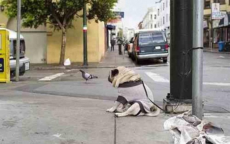 2183 Самый грустный пес в мире