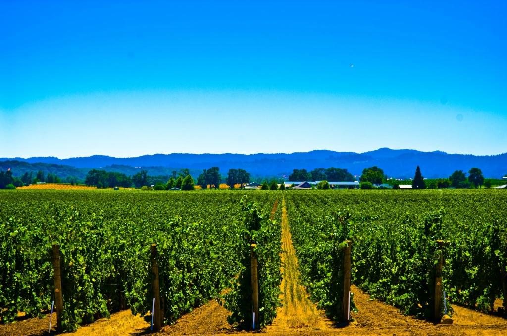 22114 Виноградники в фотографиях