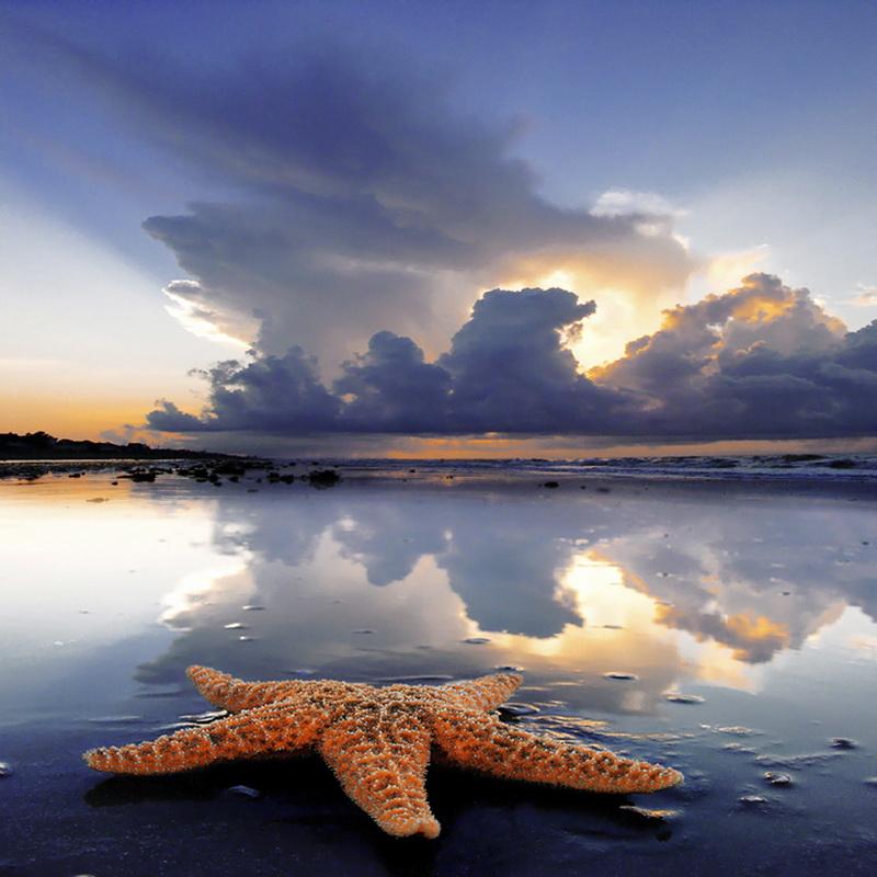 2280 Морские звезды в фотографиях