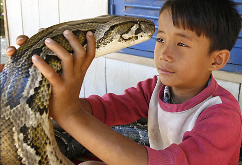 2305 Rumah python