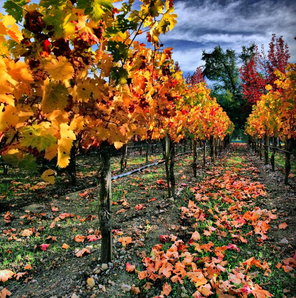 23100 Виноградники в фотографиях