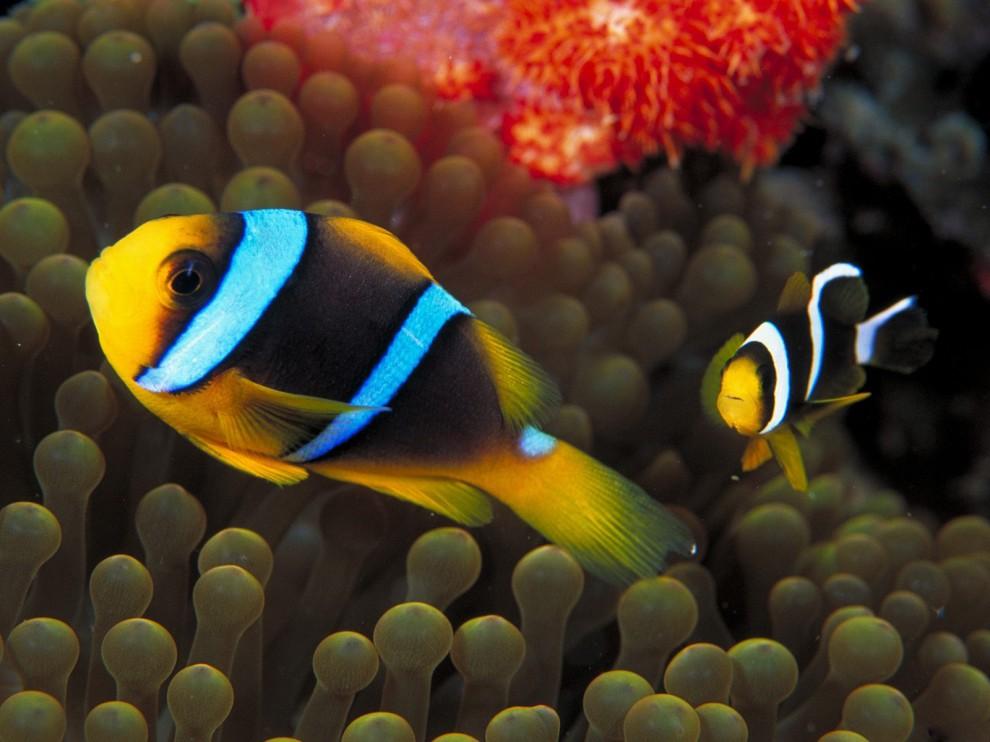 http://bigpicture.ru/wp-content/uploads/2011/11/232-990x742.jpg