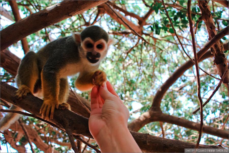 2384 Monkey Park