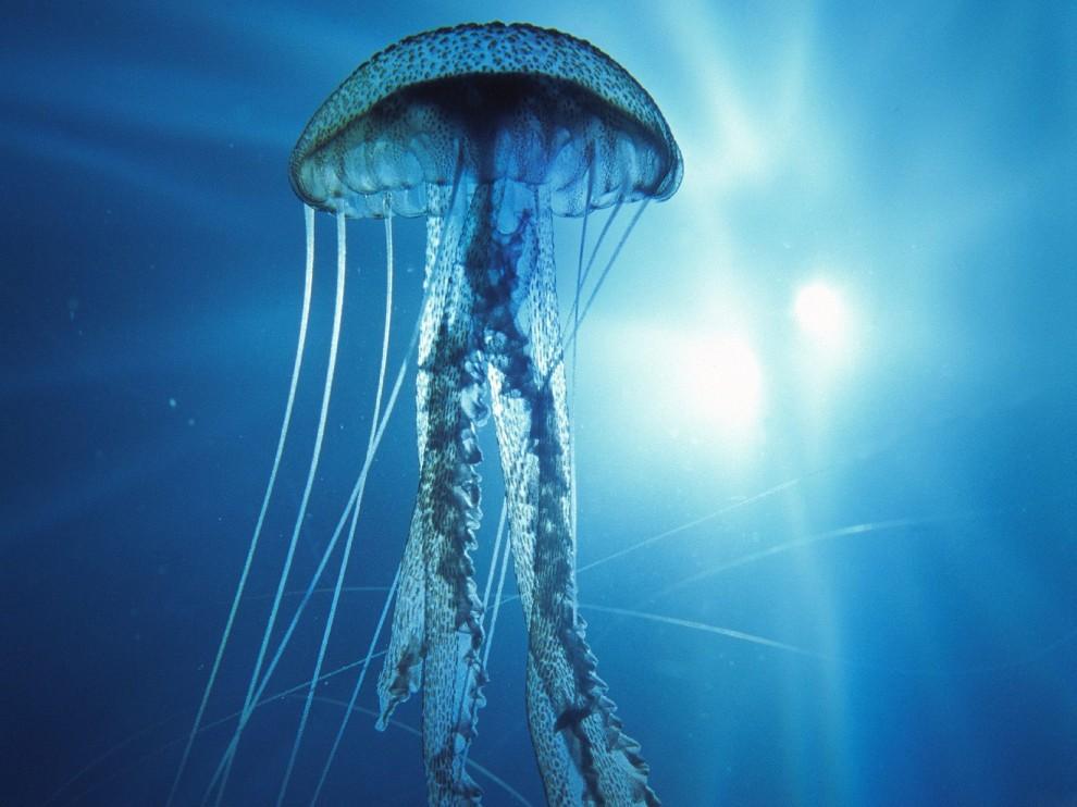 http://bigpicture.ru/wp-content/uploads/2011/11/242-990x742.jpg