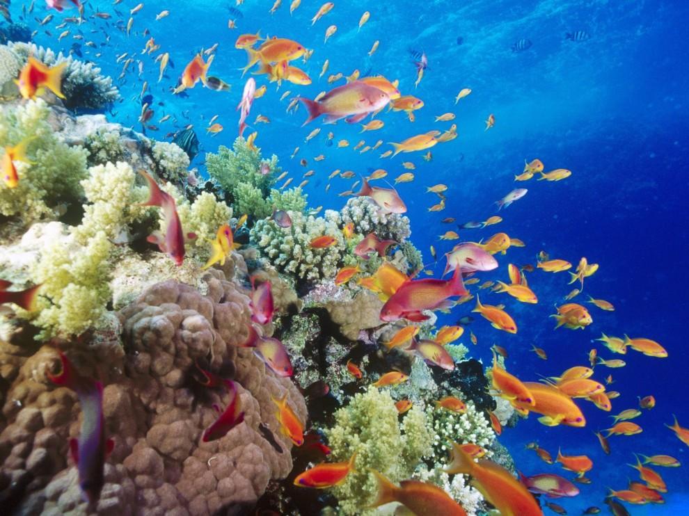 http://bigpicture.ru/wp-content/uploads/2011/11/272-990x742.jpg