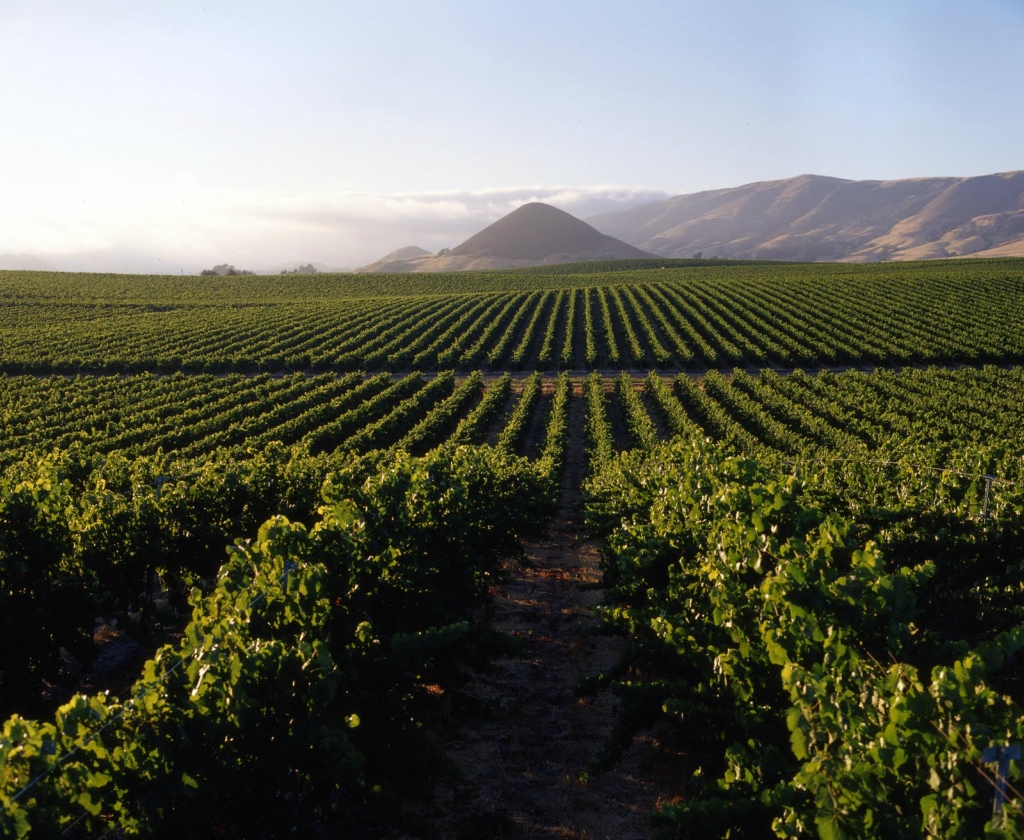 2761 Виноградники в фотографиях