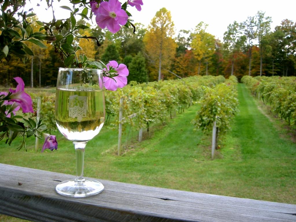 3056 Виноградники в фотографиях