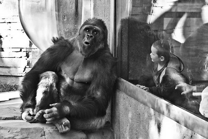3104 Планета обезьян